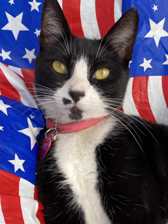 Guest Star Cat: Meet Juno, The Klepto Kat
