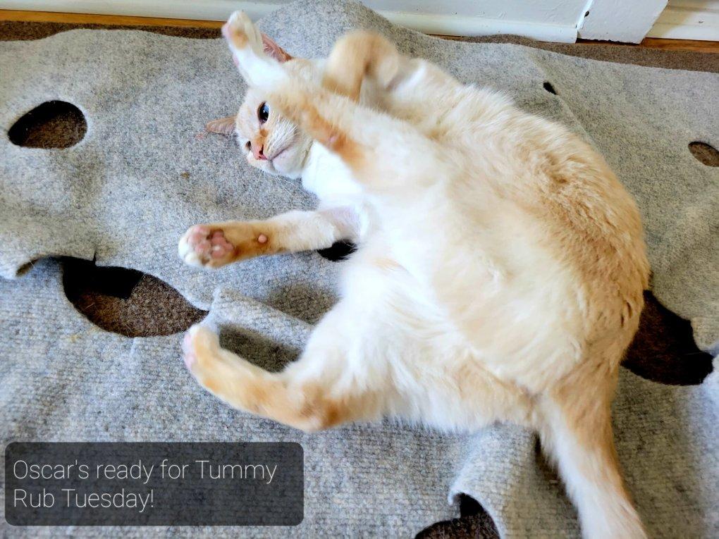 Happy #TRT – Tummy Rub Tuesday (Week 351)