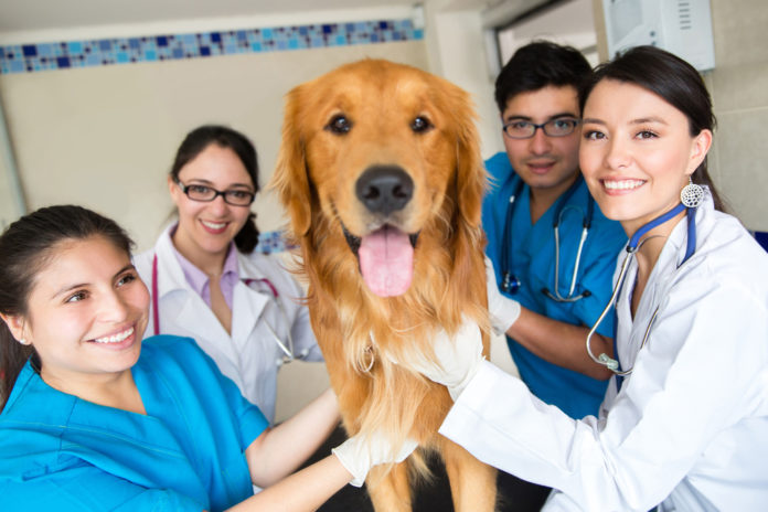 How Fear Free® makes vet visits less stressful