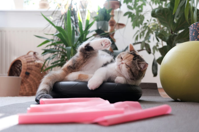 How much exercise does your cat need?