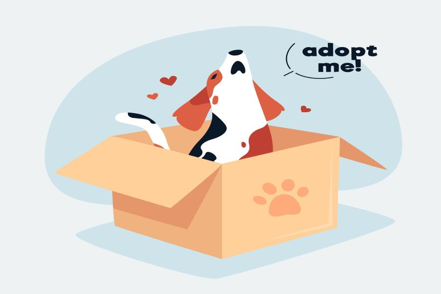 How to Detect Pet Adoption Scams