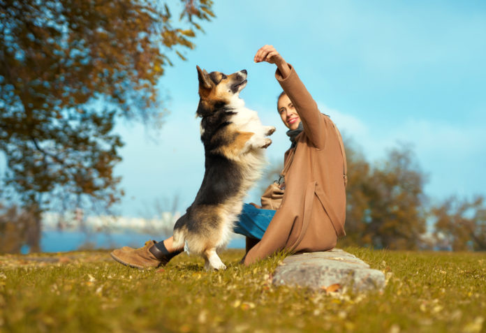 How to switch up your dog's diet with the seasons
