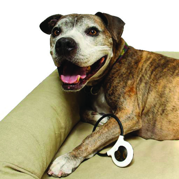 Is PEMF therapy an option for your dog or cat?