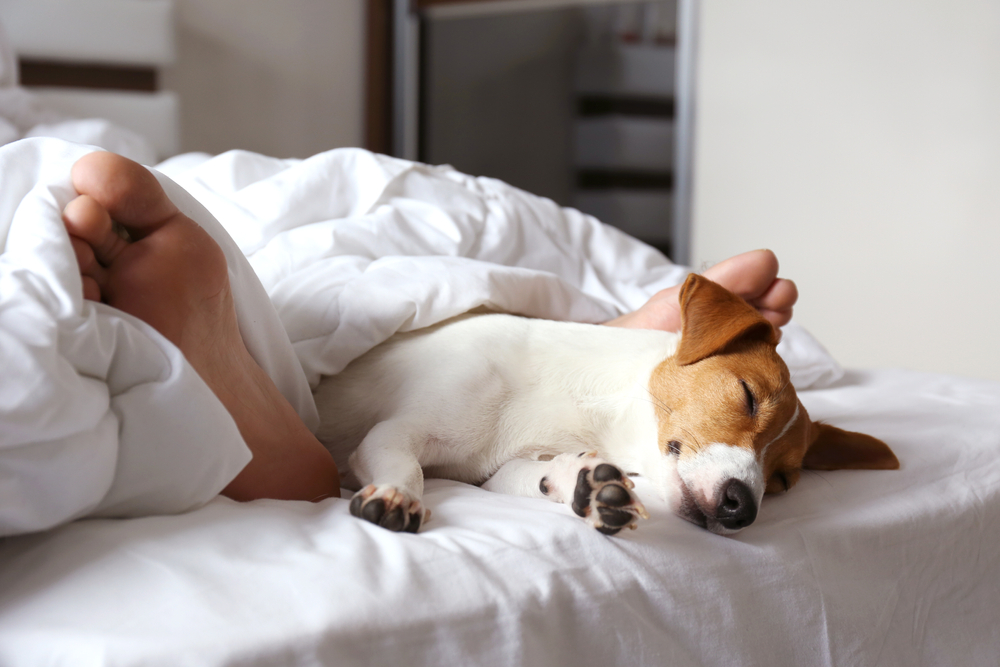 Is sleeping next to your dog good for you?