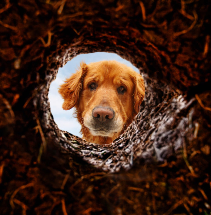 Is your dog digging up your yard?