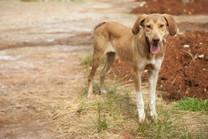 Is your rescue dog too thin?