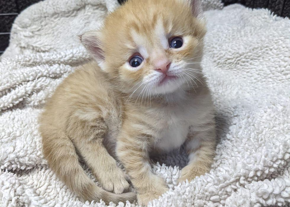 Kitten Who Has Strong Will to Live, is Determined to Do Everything Just Like Any Other Cat