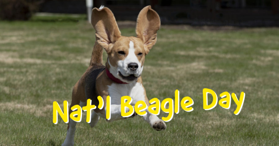 National Beagle Day