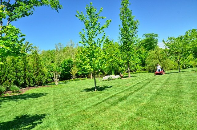 Our Favorite Pet-Safe Lawn and Garden Care Products