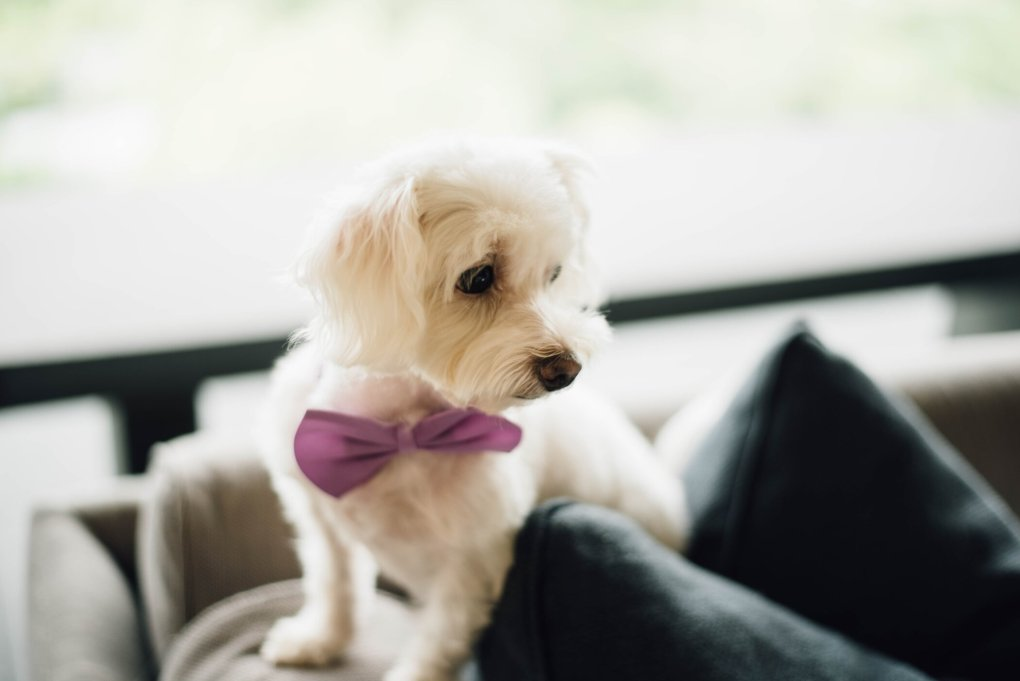 Pet Weddings: What you Should Know