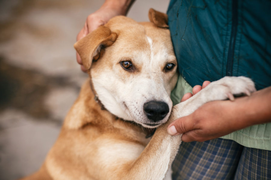 Providing pandemic aid to animal shelters