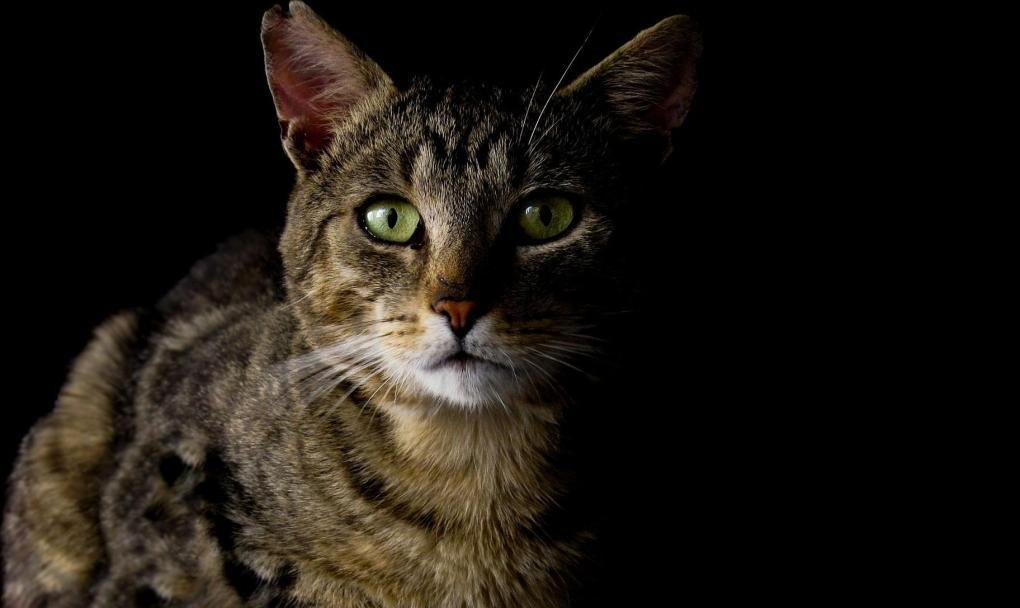 Purrsday Poetry: Feline