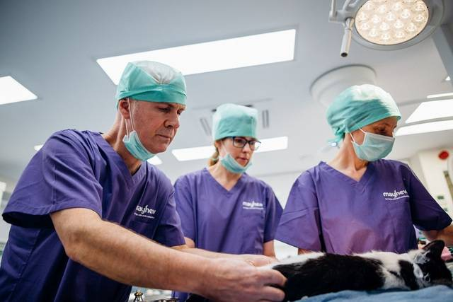 RCVS News: Animal Owners Urged to Complete Consultation on Future Governance of the Vet Professions