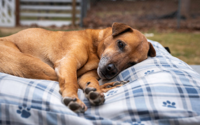 Shelters and rescues for senior dogs and cats – an inside look