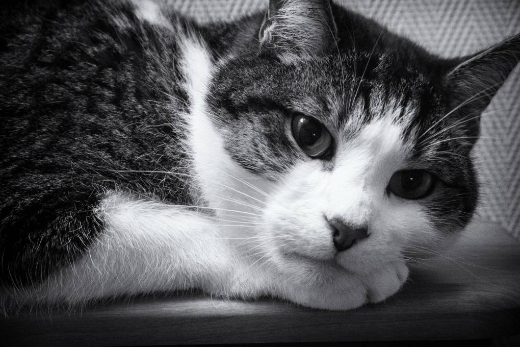 Stress Awareness in Cats