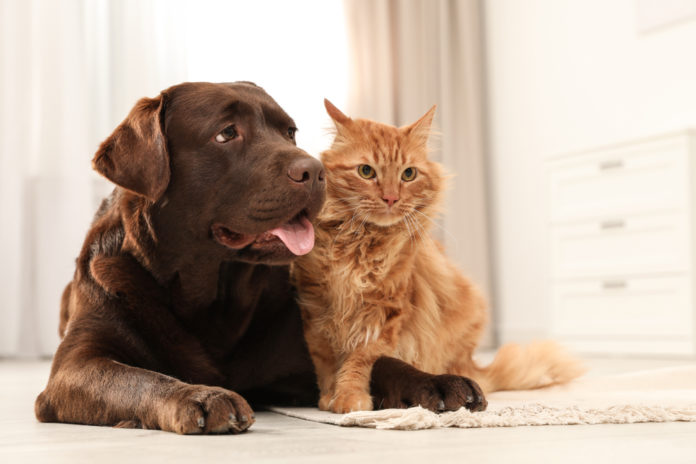 Supporting joint health as dogs and cats age