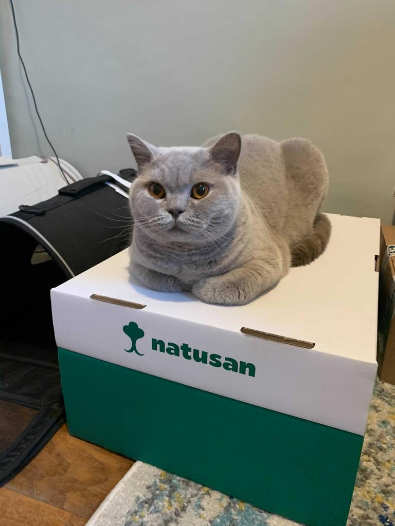 The Eco-friendly Cat Litter Solution That Works!