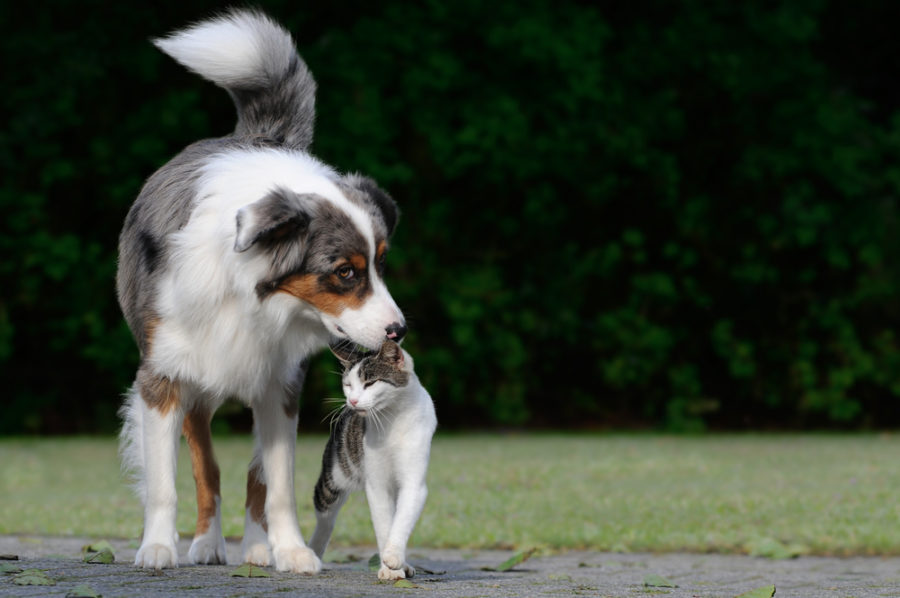 Top 10 ways to naturally support your dog or cat's immune system