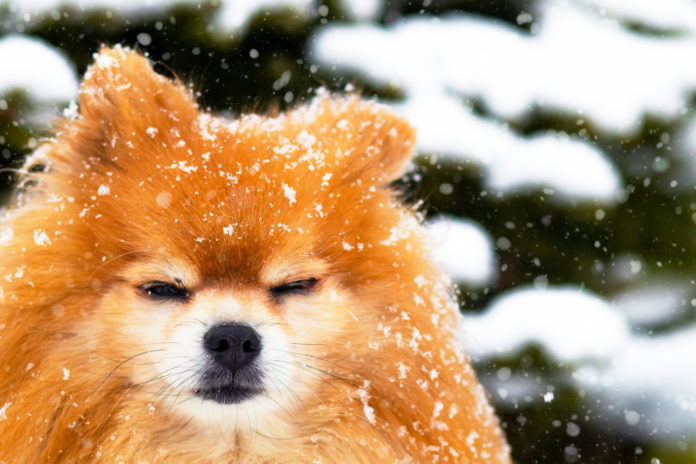 Top winter safety tips for pets