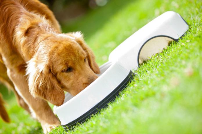 Wholistic Pet Organics® is dedicated to helping animals enjoy longer, healthier lives
