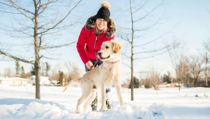 Why it's important to maintain your dog's walking routine during the holidays
