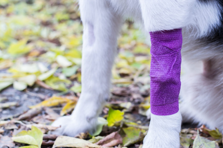 Why you should improve your pet first aid skills