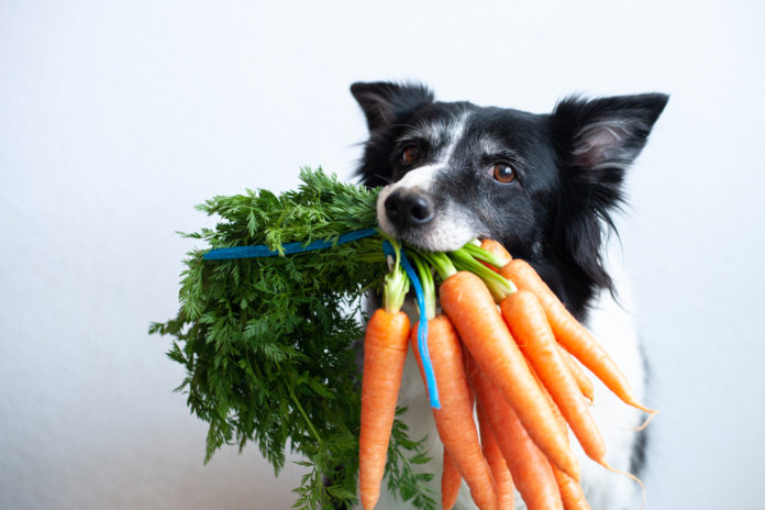 Why your dog should eat fruits and veggies