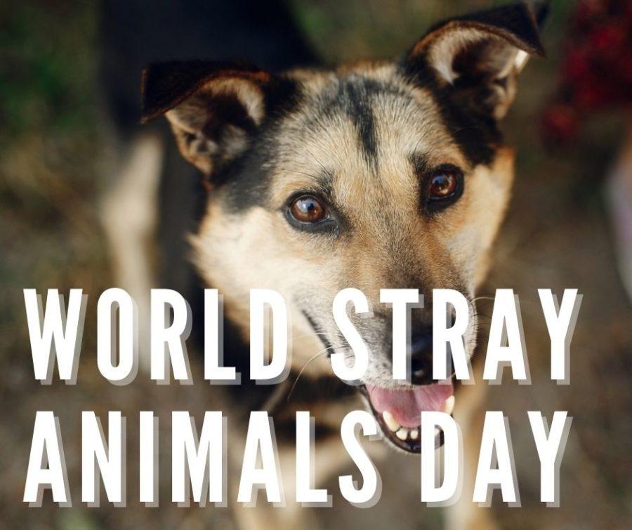 World Stray Animals Day
