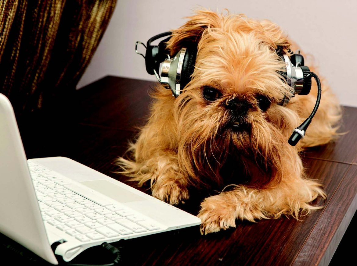 10 Podcasts to Bark About