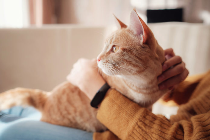 6 ways to calm a stressed cat