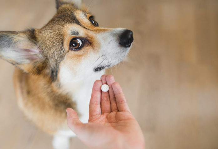 Can I give human medications to my dog or cat?