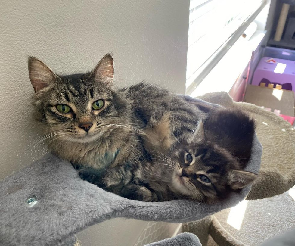 Cat and Her Only Kitten Share Unbreakable Bond – Journey to Their Dream Home Together