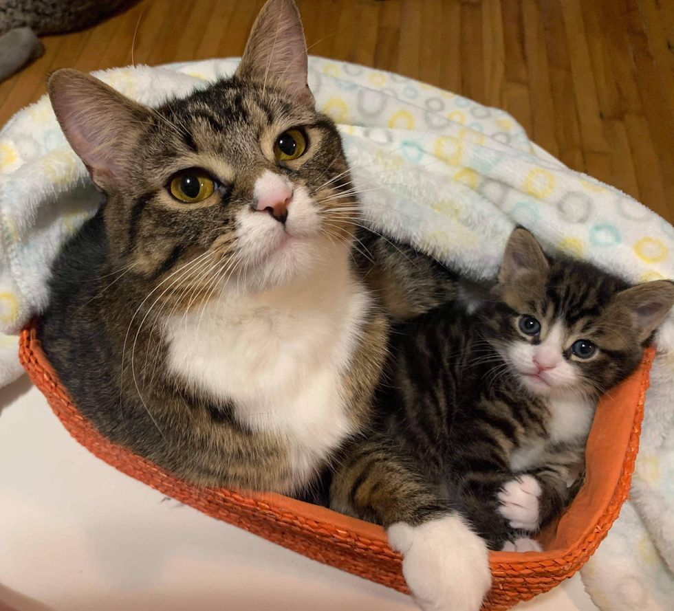 Cat Got Back to Her Beloved Kitten and Never Left His Side – They Hope for Home Together
