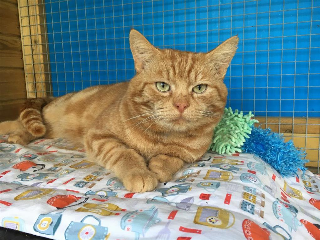 Cat Left Behind After Owner Died Found Loving new Home by Blue Cross