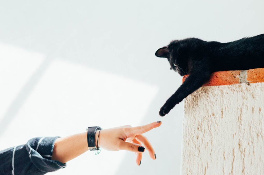 Consent in Cats – When Does Your Cat Want To Be Pet Or Picked Up?