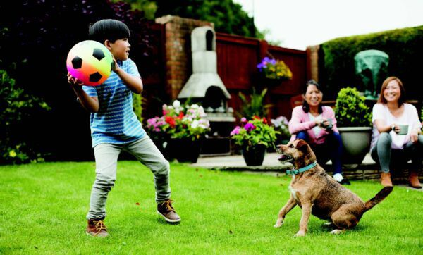 Fetch Fido Some Liability Insurance