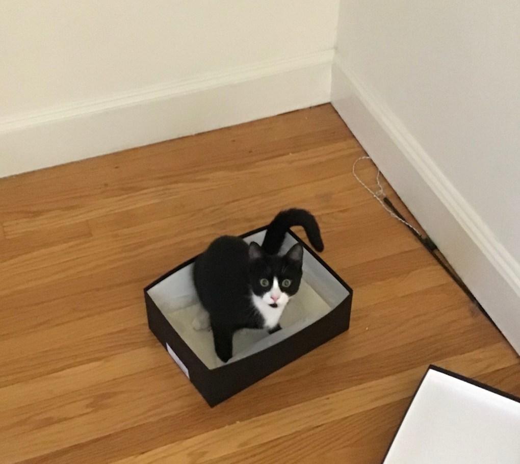 Guest Star Cat: Lili & Friends