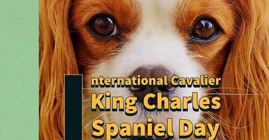 International Cavalier King Charles Spaniel Day