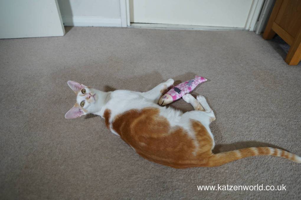 Katzenworld Cats: Our Magical Fish Shaped Cat Toy from Japan!