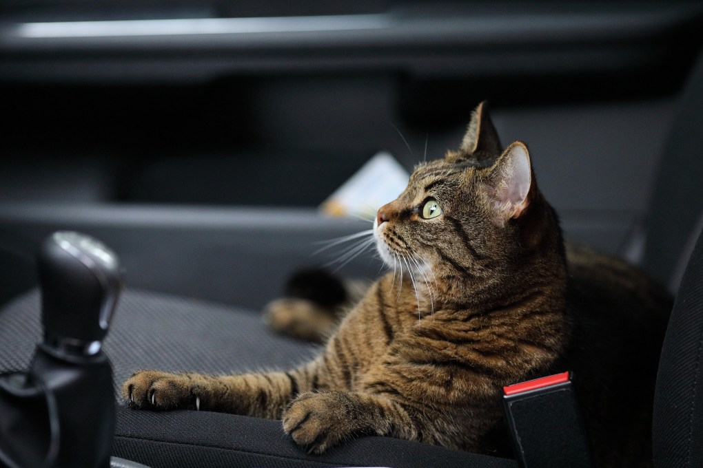 Keeping Your Cat Safe In The Car