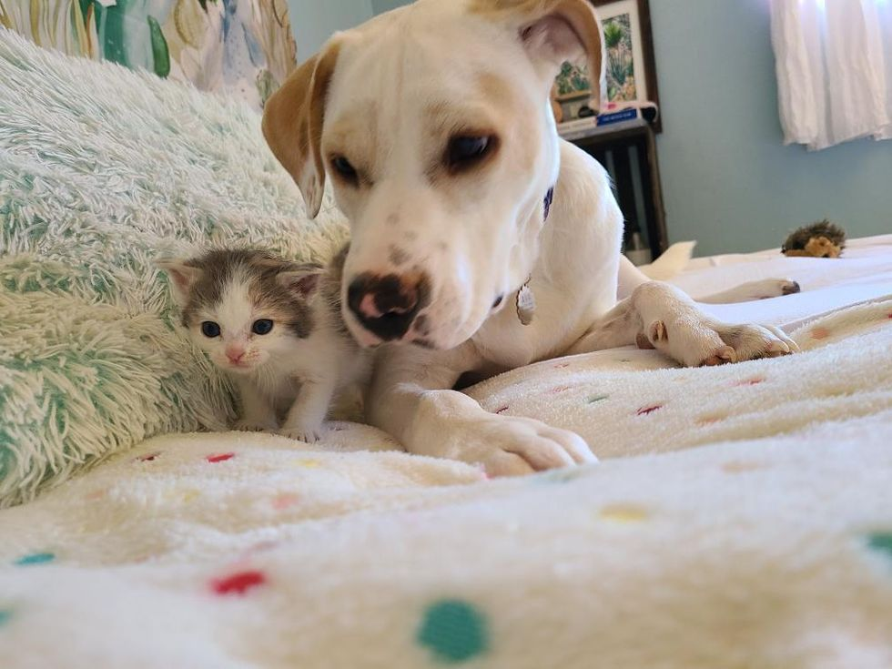 Kitten Showed Up in Backyard and Found Canine Friend to Keep Her Company