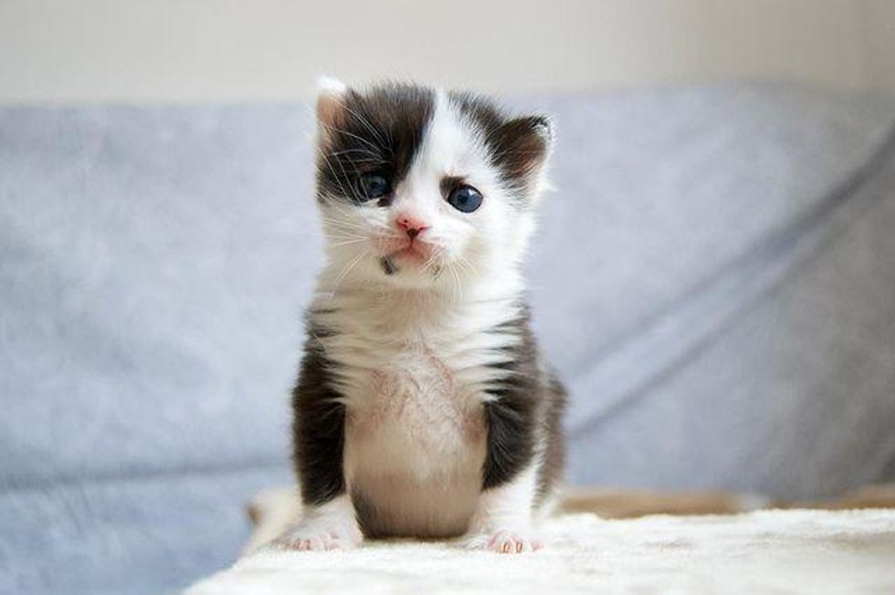Kitten that Looks Like a Panda is Thriving After Being Found in a Box