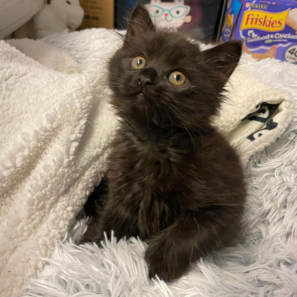 Kitten with Charming Personality Wins Over a Family and Their Cats