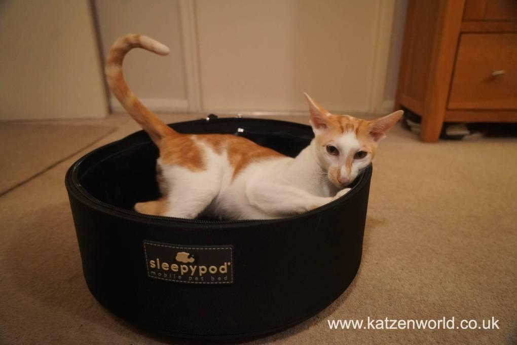 Mactavish: My Trip to the Vet in the Sleepypod Mobile Pet Bed
