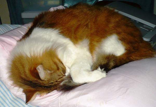 Purrsday Poetry: Fluffy Heart
