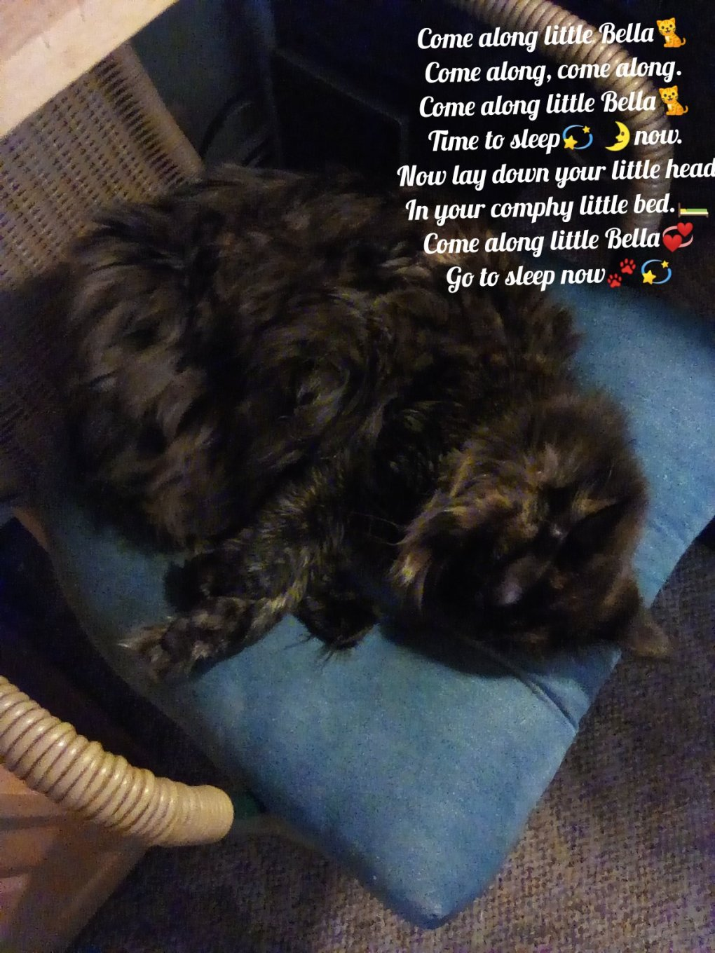 Purrsday Poetry: Little Bella