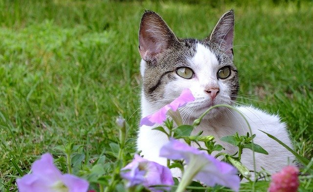 Seasonal Pet Allergies: What To Look For & How To Handle