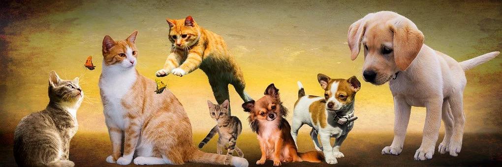 Seven Ways to Prevent Pet Theft