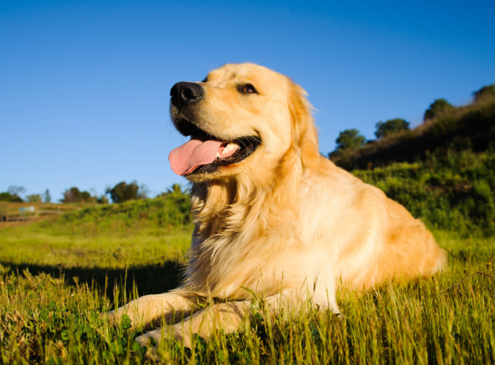 Smiling Blue Skies Cancer Fund