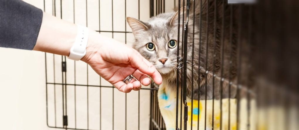 Struggling Cat Rescues to be Helped by Specialist Cat Insurer, Agria Pet Insurance